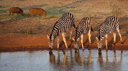 رحلات   كينيا رحلات فى  كينيا عروض سياحيه إلى كينيا