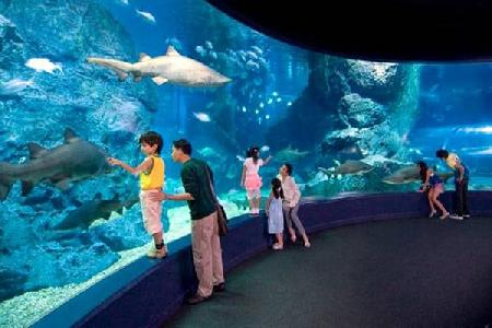 Visitar Sea Life Bangkok Ocean World