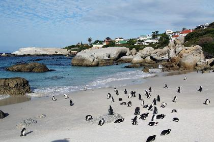 Travel to  South Africa Tours in  South Africa Travel Offers to South Africa
