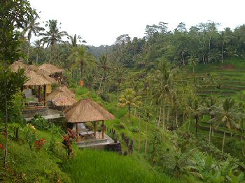 Travel Offer Bali Island Bali Indonesia 08 Days