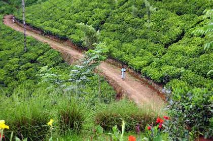 رحلات   سريلانكا رحلات فى  سريلانكا عروض سياحيه إلى سريلانكا